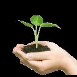 Экология и волонтерство