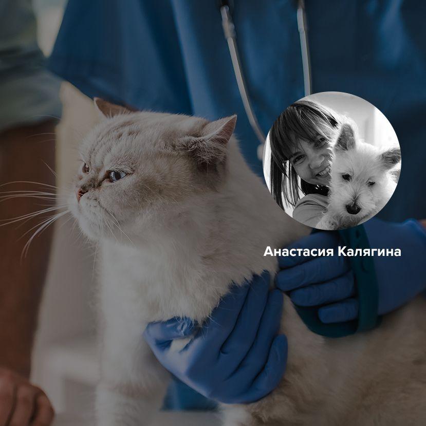 Какие прививки необходимо сделать питомцу перед летом? Ответ ветеринарного врача