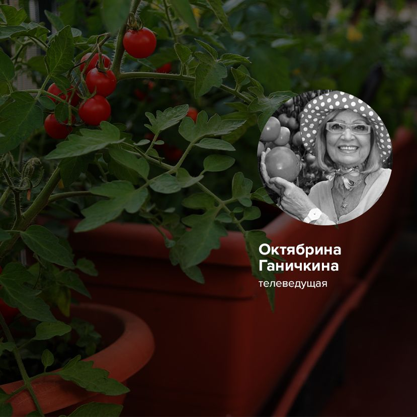Мини-огород на балконе: лайфхаки от главного эксперта страны по садоводству