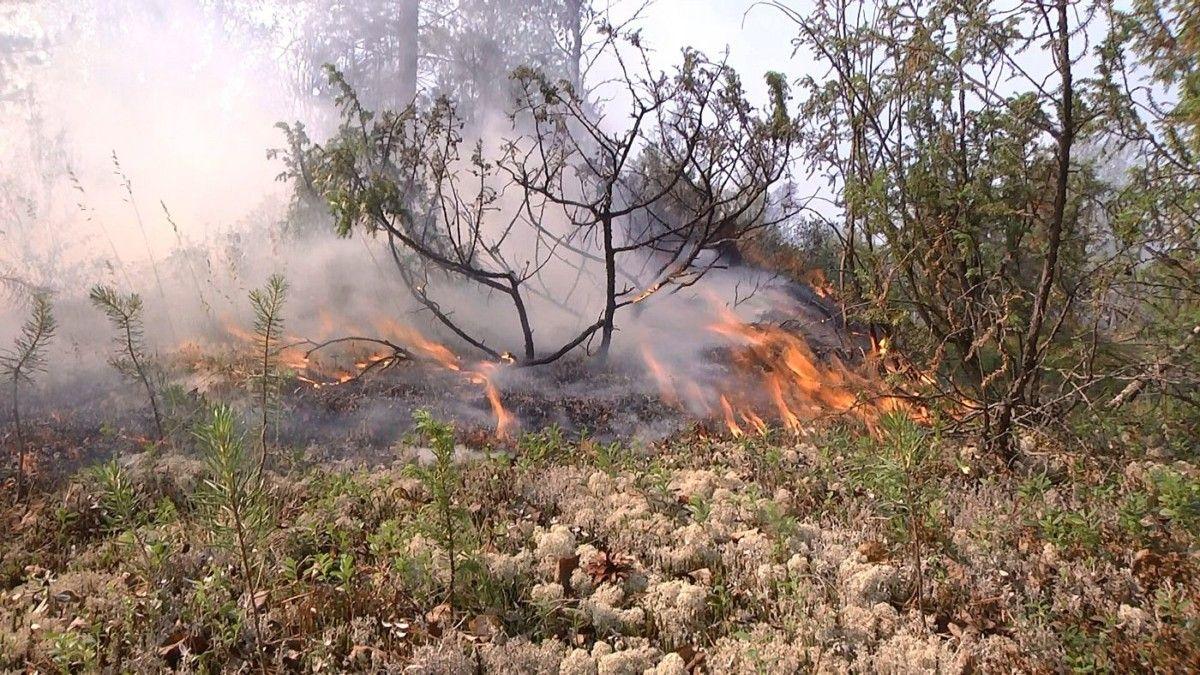 Волонтёры Норильска будут бороться с пожарами в тундре